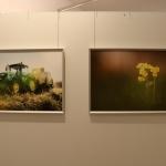 FotoausstellungFridolfing2019IMG_0747
