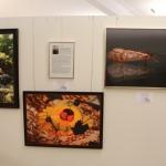 FotoausstellungFridolfing2019IMG_0757